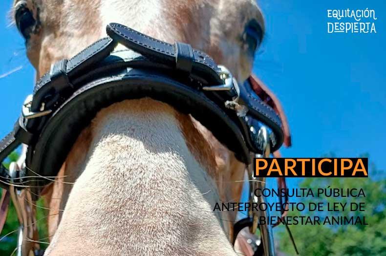 Colsulta pública Anteproyecto Ley Bienestar Animal 15 diciembre 2020